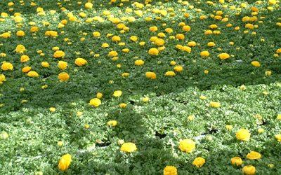 Frühjahrsblüher